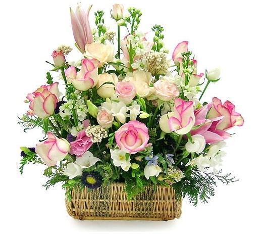 phan mem quan ly hoa